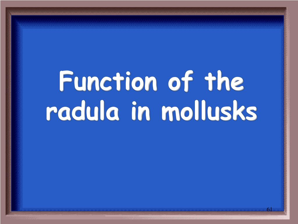Function of the radula in mollusks