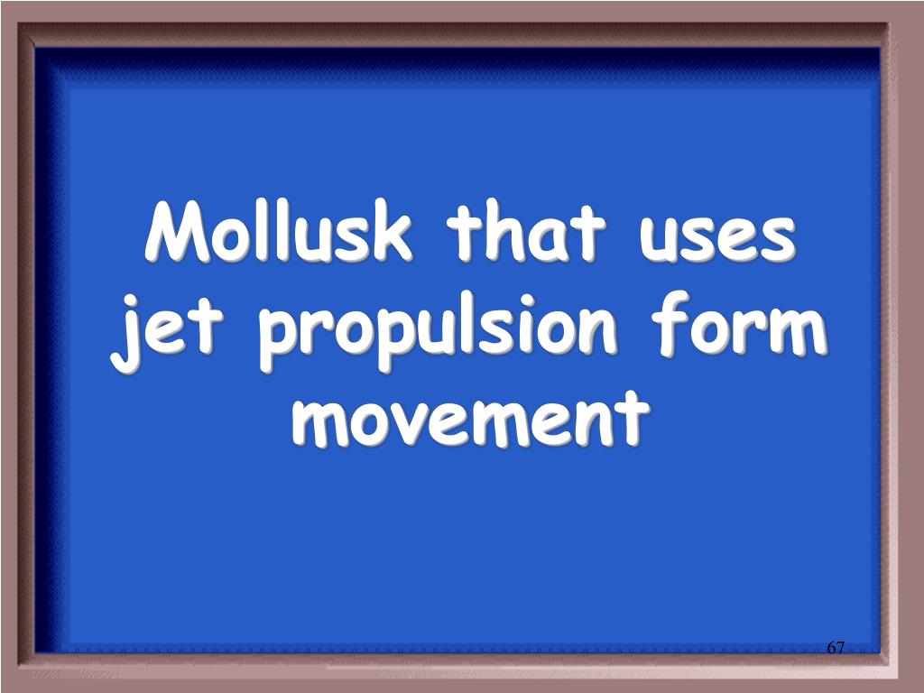 Mollusk that uses jet propulsion form movement