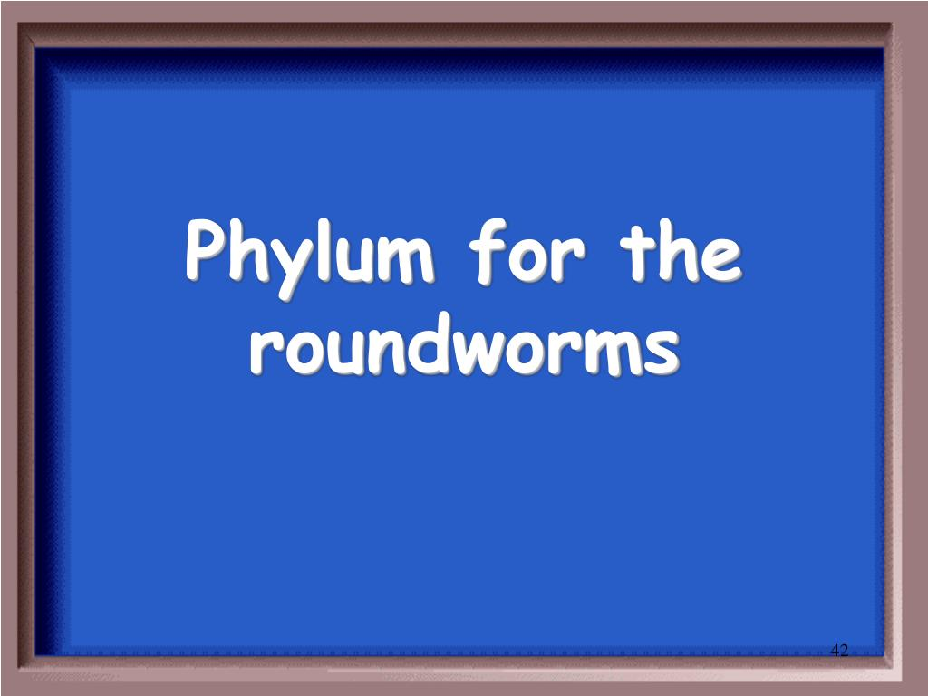 Phylum for the roundworms