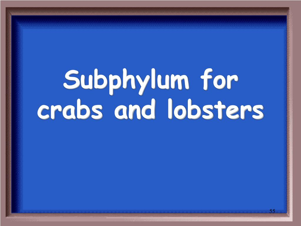 Subphylum for crabs and lobsters