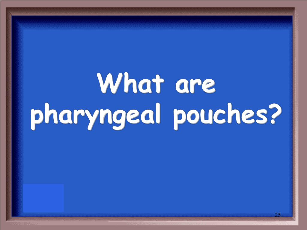 What are pharyngeal pouches?