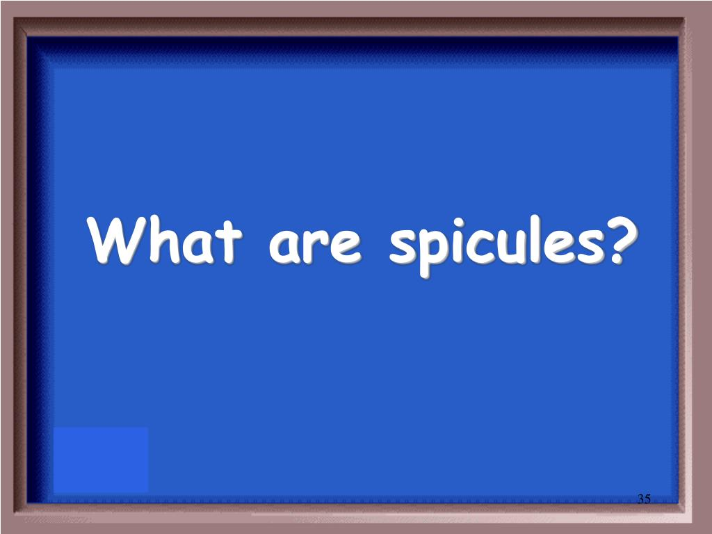 What are spicules?