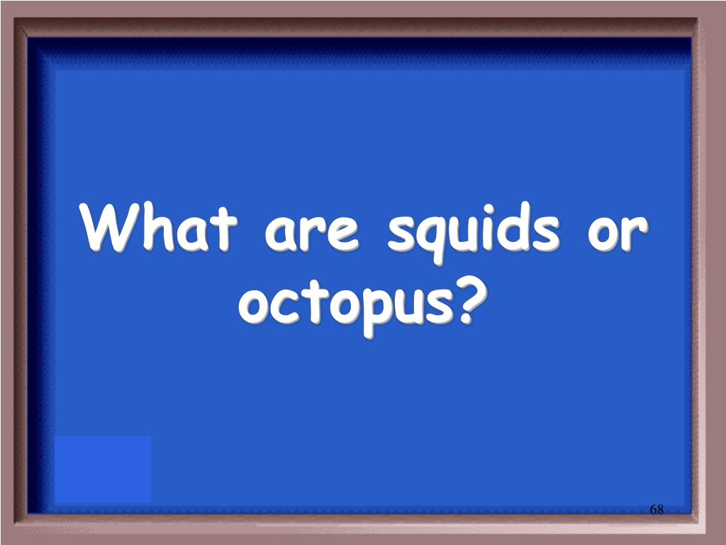 What are squids or octopus?