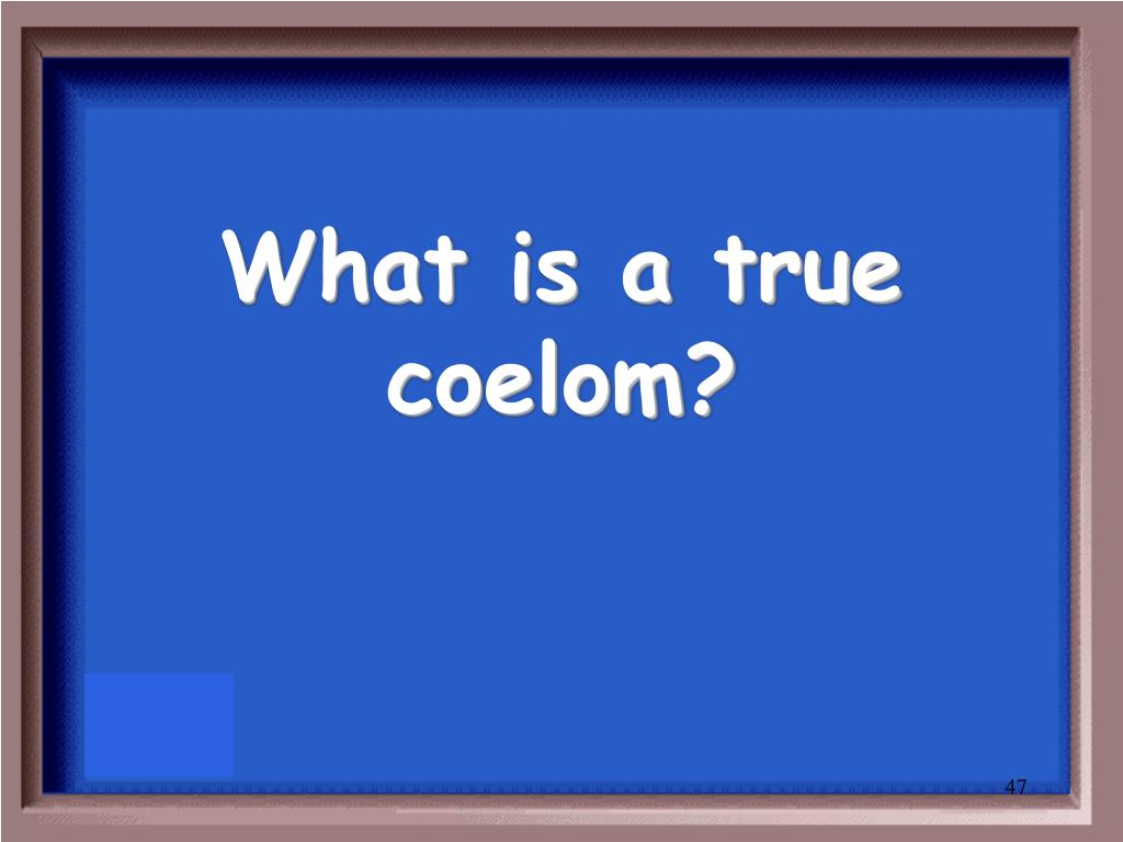 What is a true coelom?