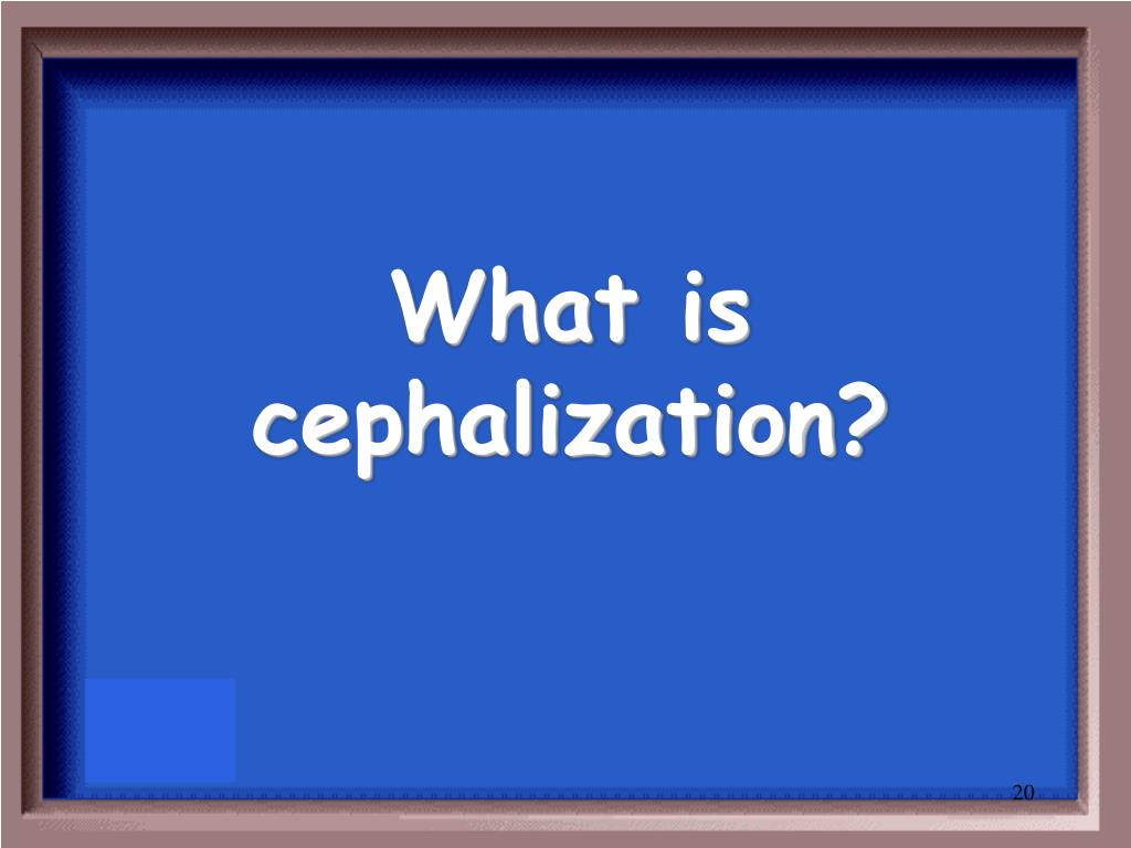 What is cephalization?