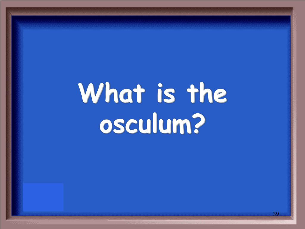 What is the osculum?