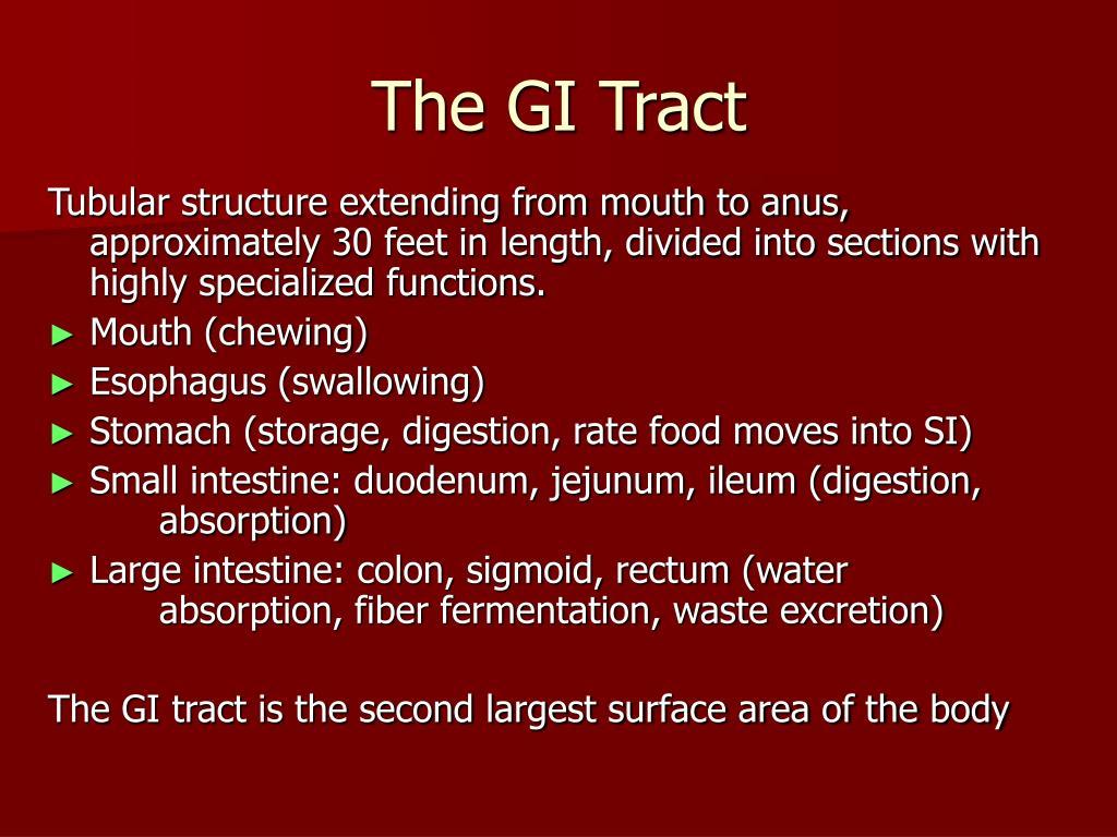 The GI Tract