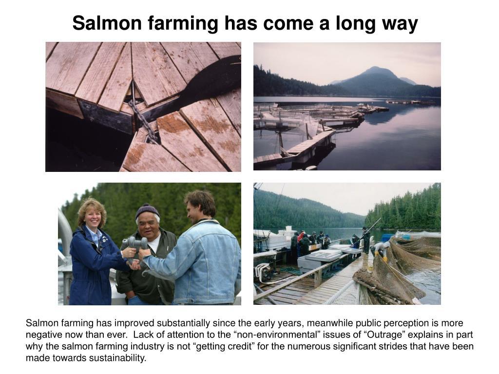 Salmon farming has come a long way