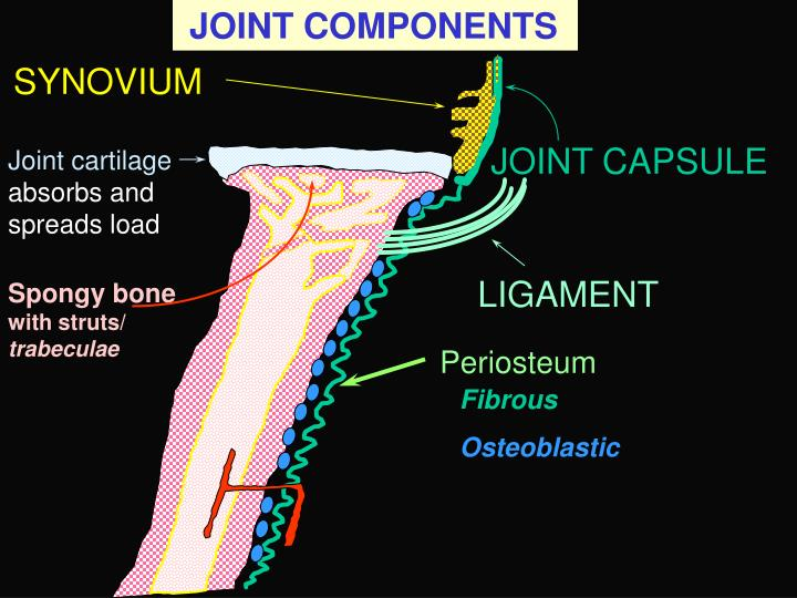 JOINT COMPONENTS