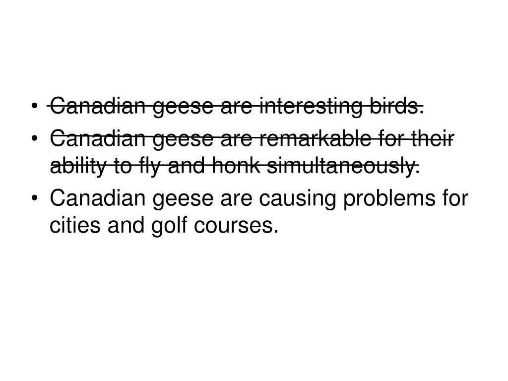 Canadian geese are interesting birds.