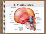 2 maxilla lateral