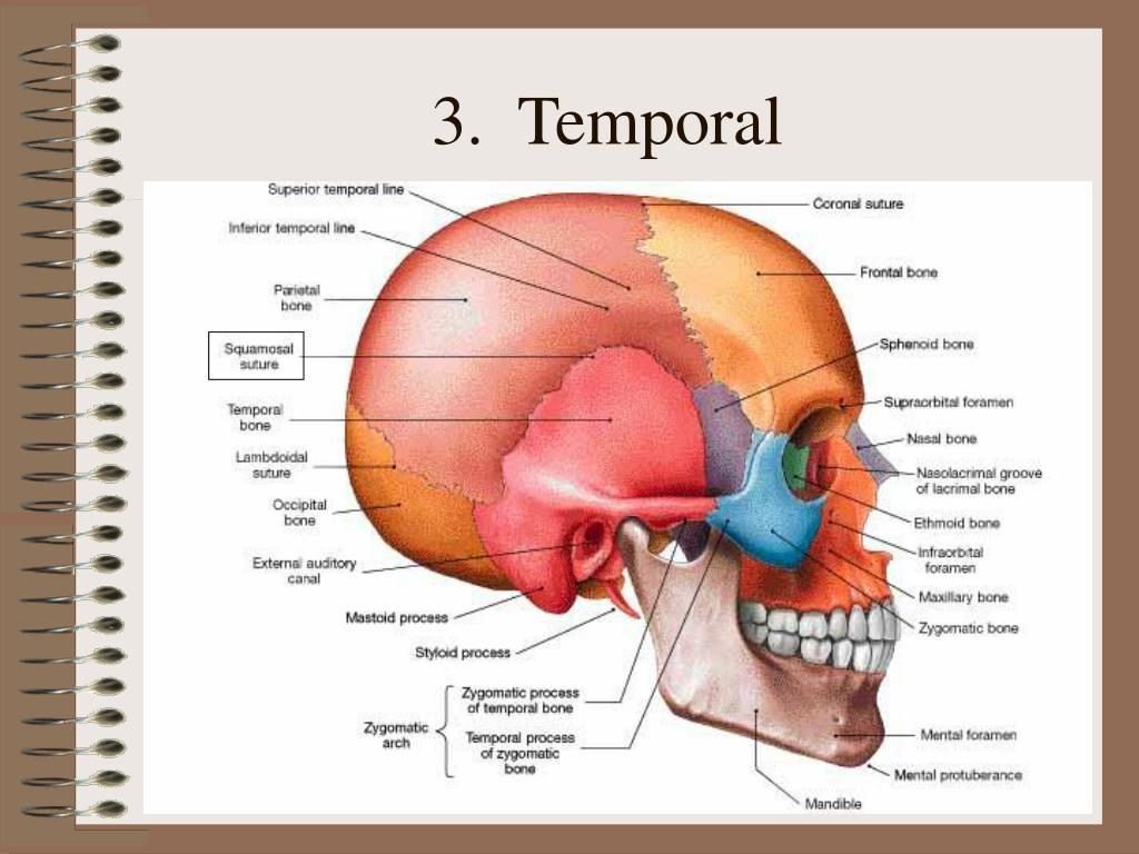 3.  Temporal