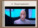 4 nasal anterior62