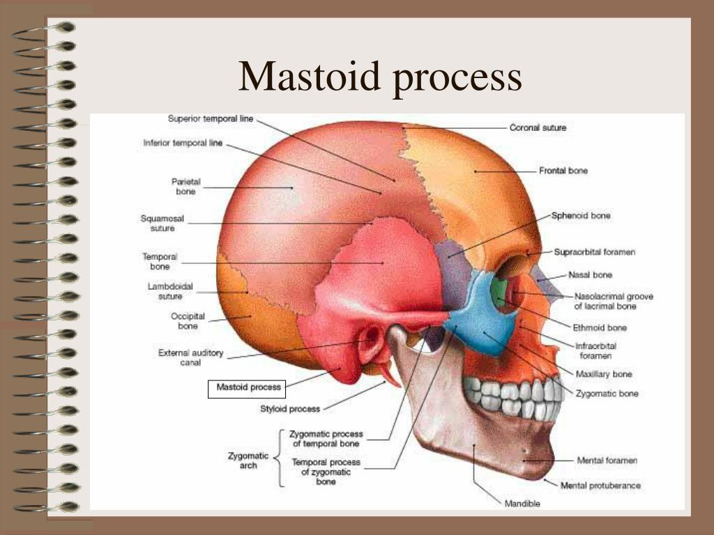 Mastoid process