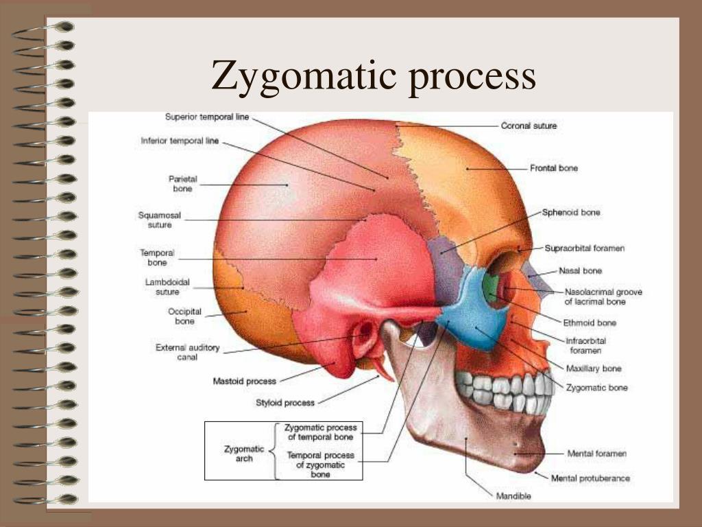Zygomatic process