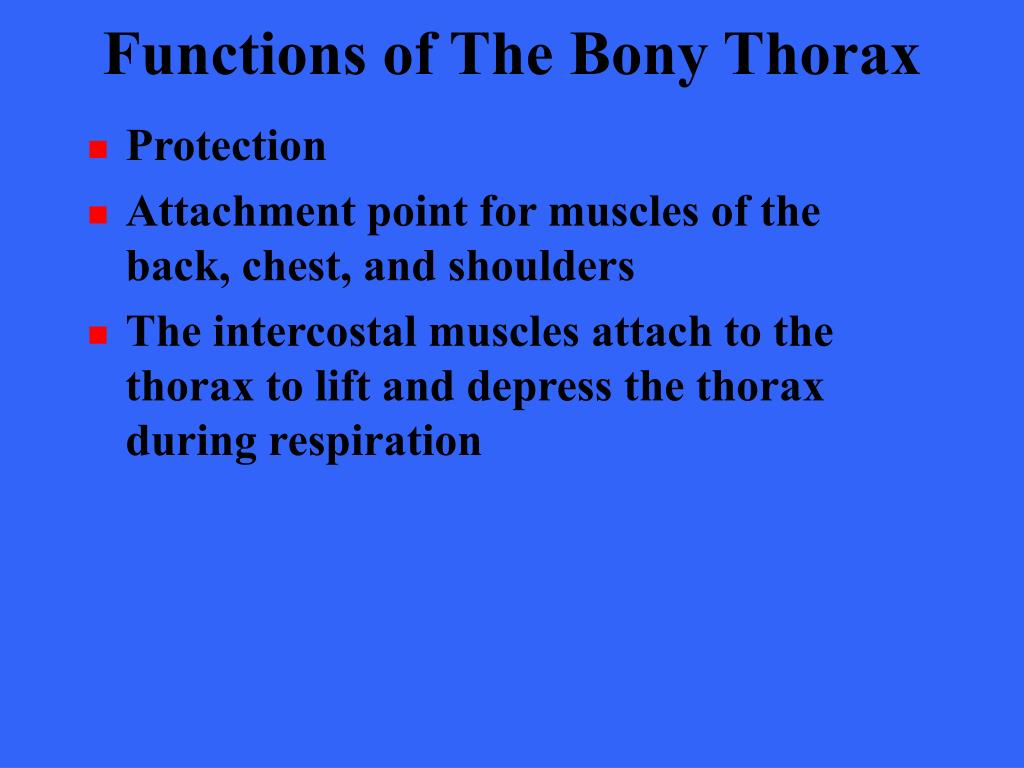 Functions of The Bony Thorax
