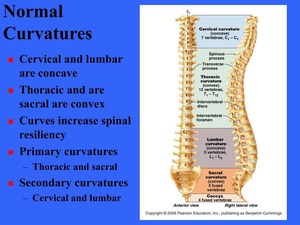 Normal Curvatures