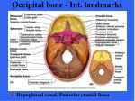 occipital bone int landmarks