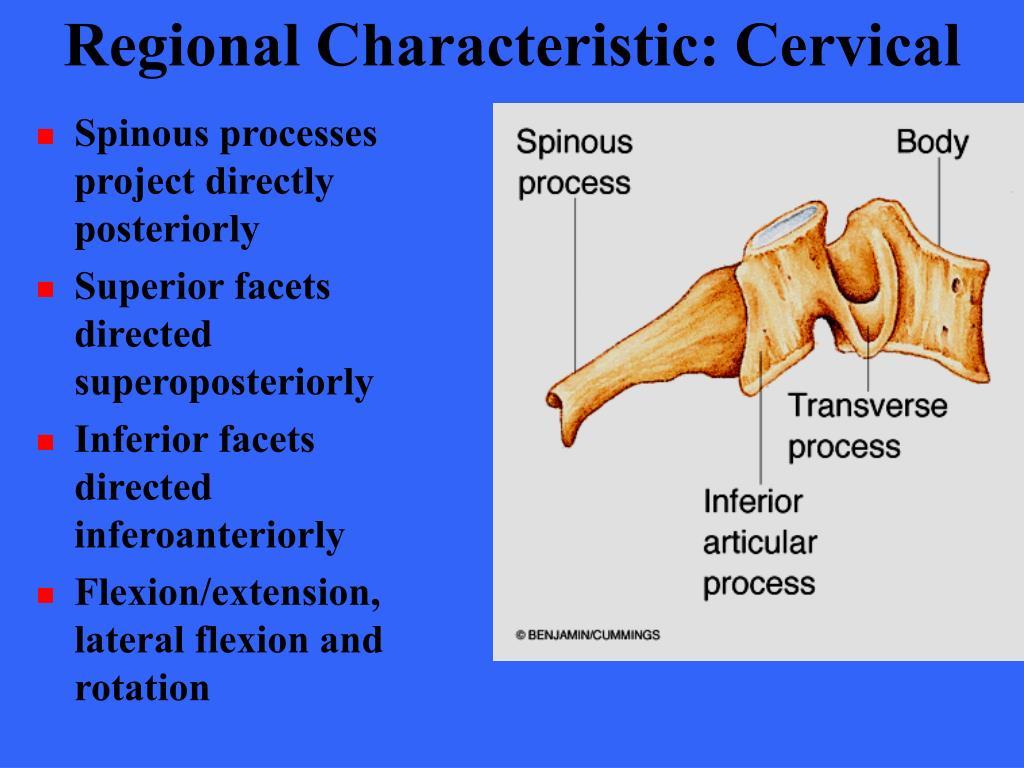 Regional Characteristic: Cervical