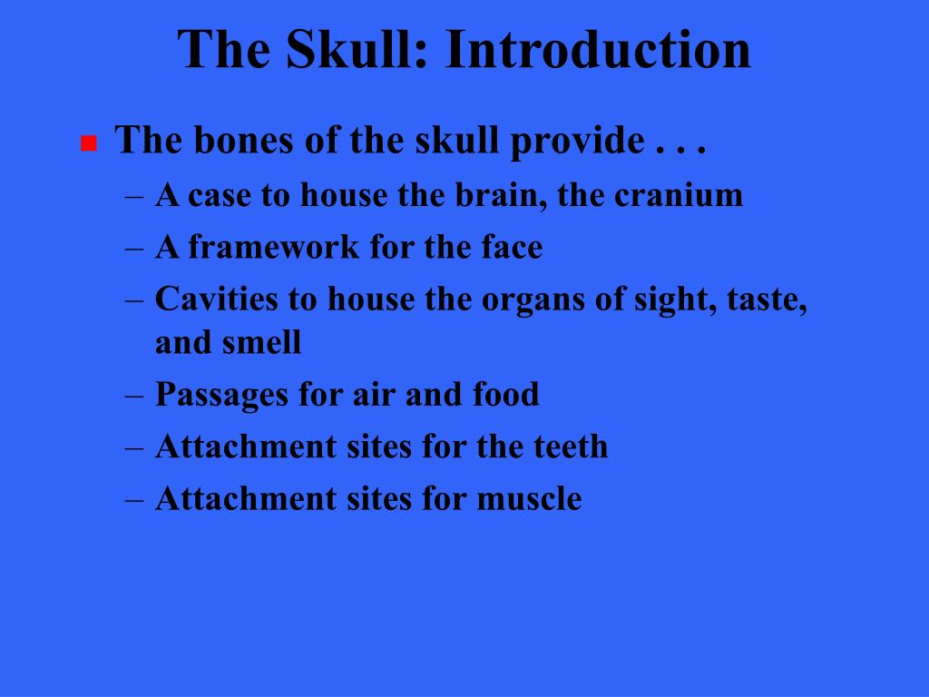 The Skull: Introduction