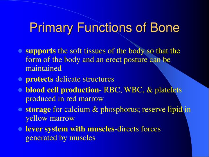 Primary functions of bone