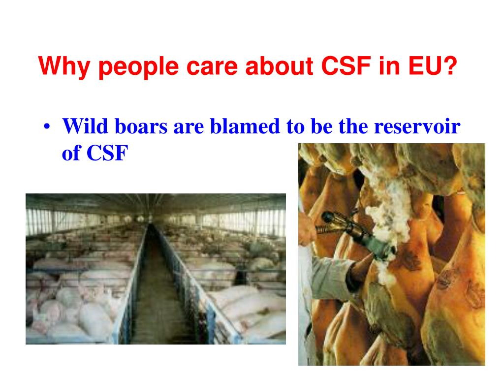 Why people care about CSF in EU?