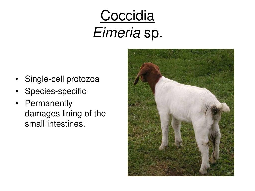 Single-cell protozoa