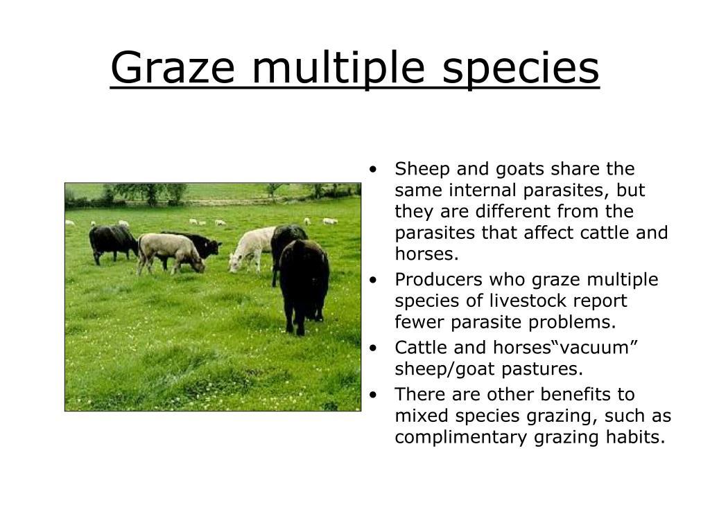 Graze multiple species