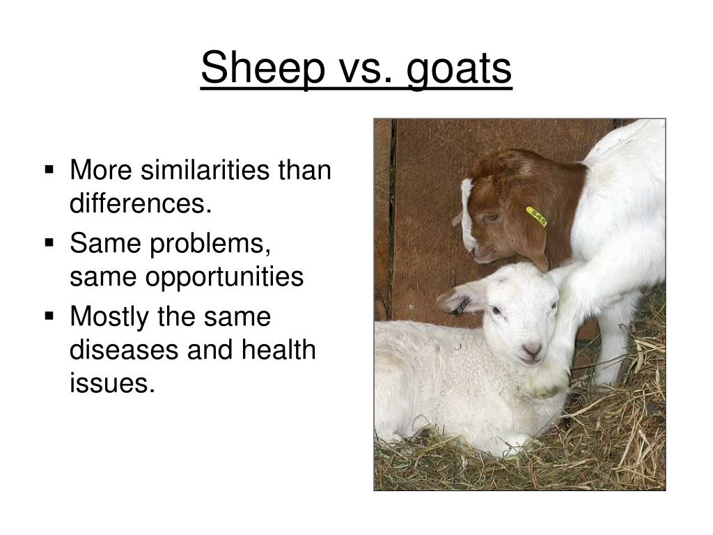 More similarities than differences.