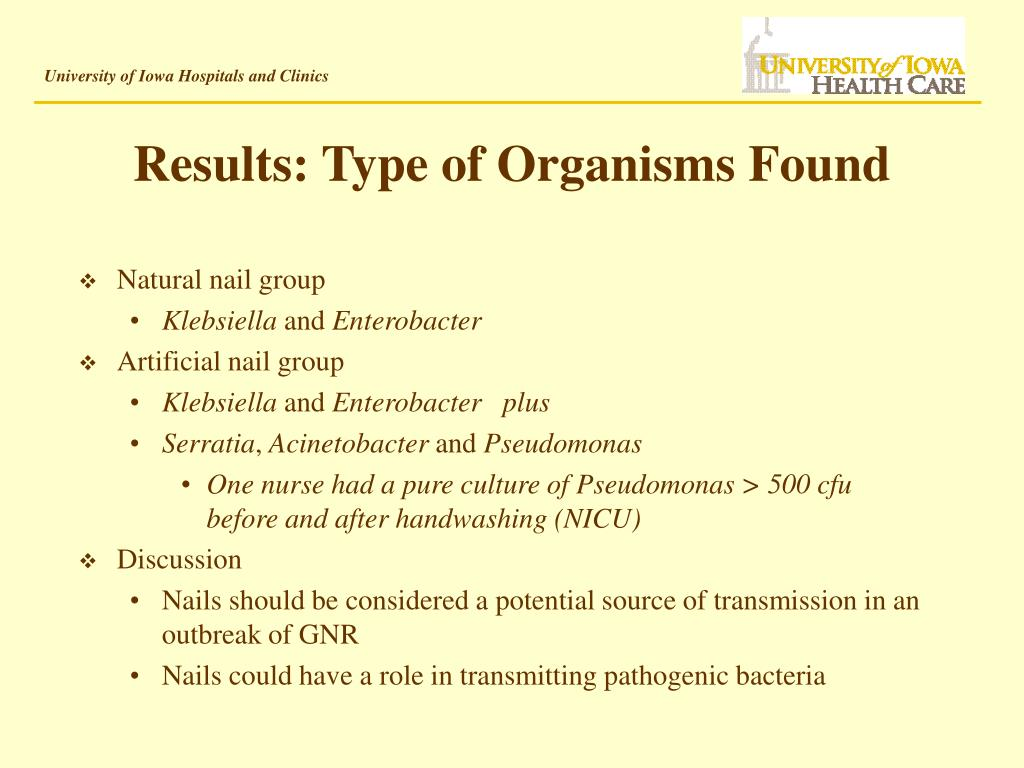 Results: Type of Organisms Found