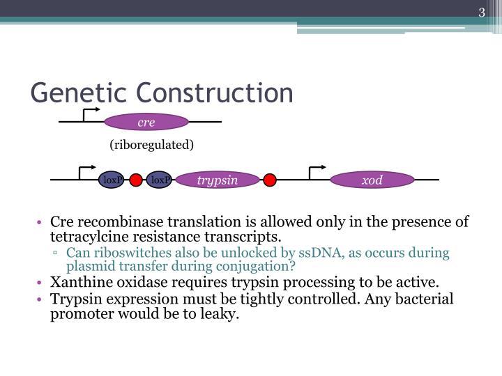 Genetic Construction