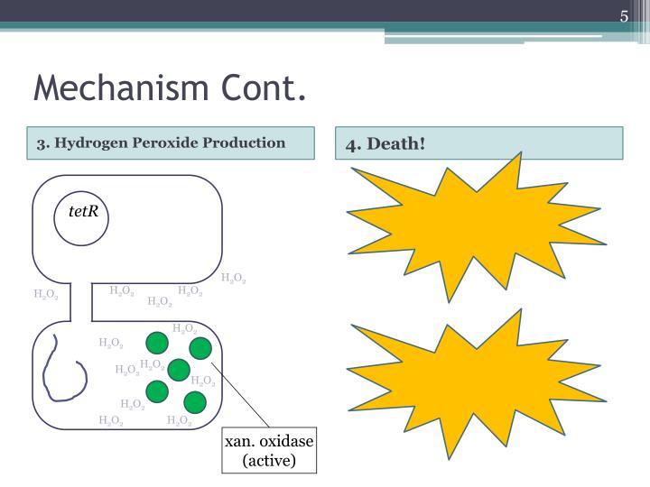 Mechanism Cont.