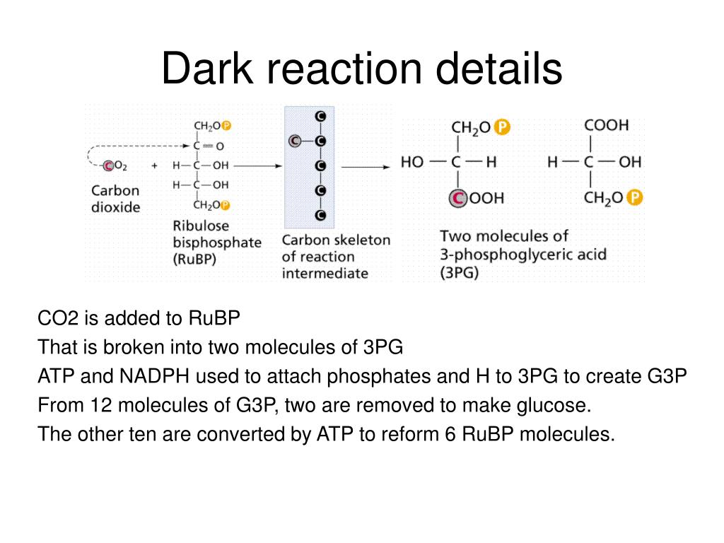 Dark reaction details