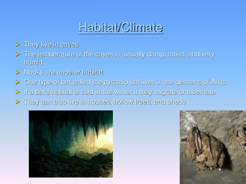 Habitat/Climate