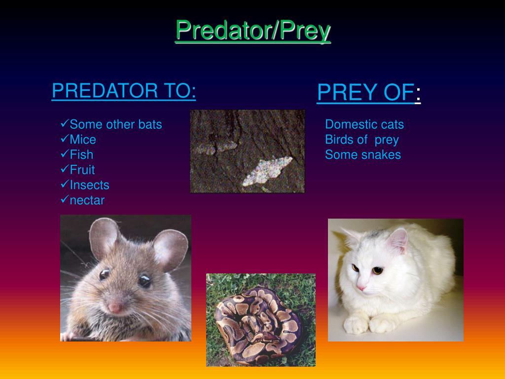Predator/Prey