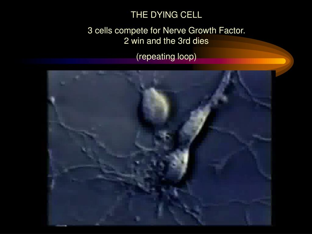 THE DYING CELL