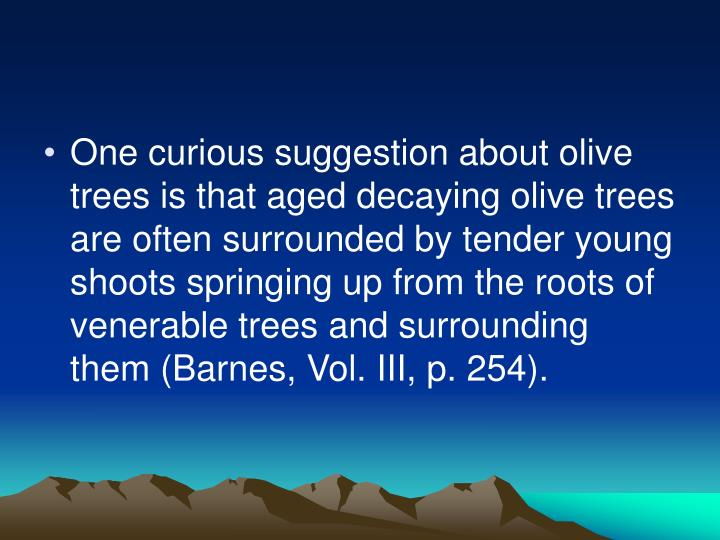 One curious suggestion about olive trees is that aged decaying olive trees are often surrounded by tender young shoots springing up from the roots of venerable trees and surrounding them (Barnes, Vol. III, p. 254).
