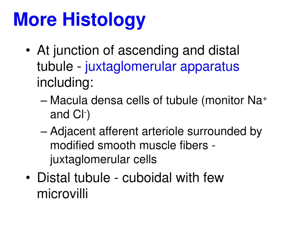 More Histology