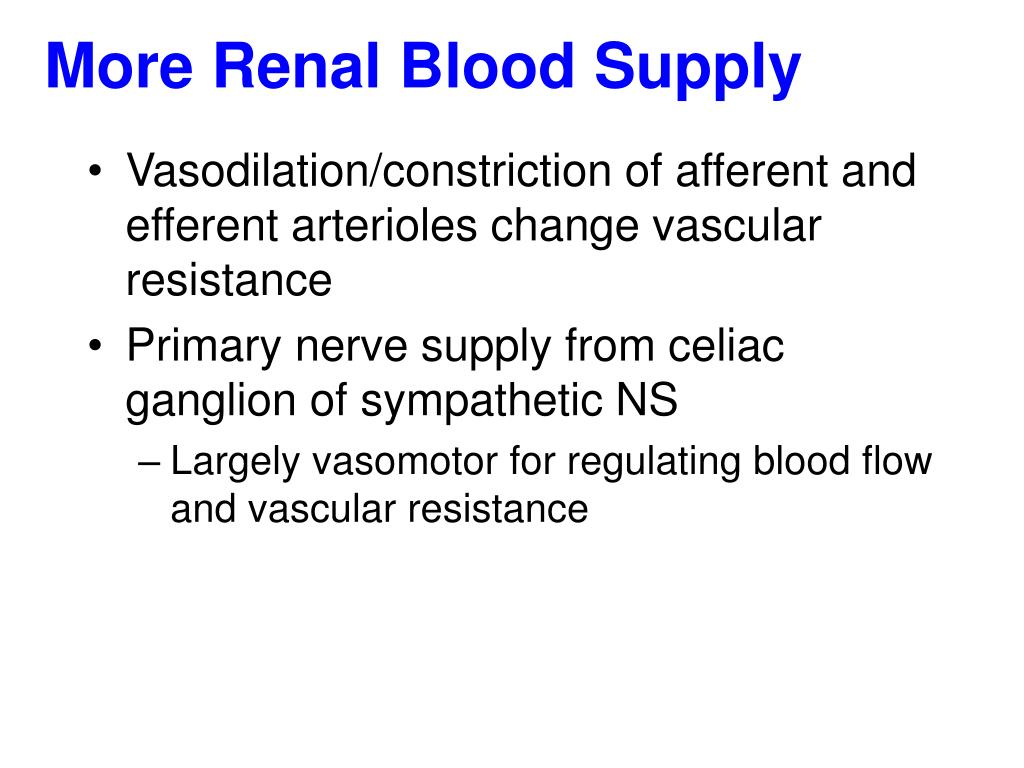 More Renal Blood Supply