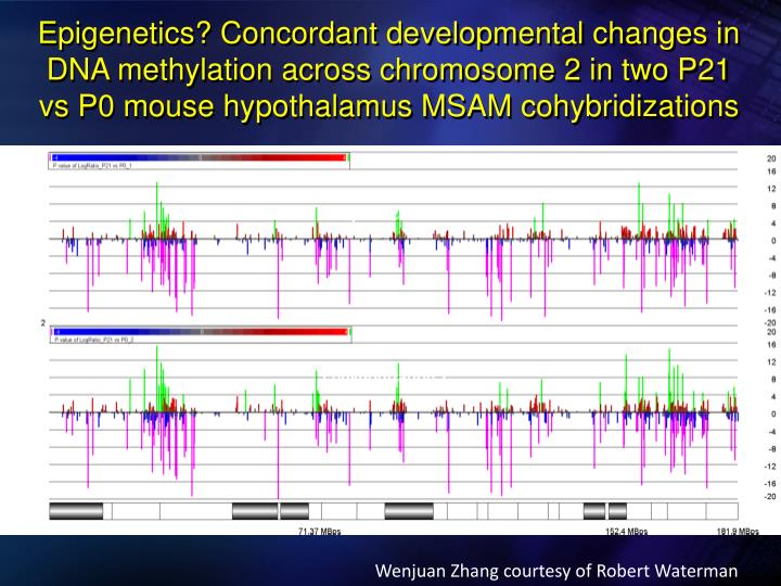 Epigenetics? Concordant developmental changes in DNA methylation across chromosome 2 in two P21 vs P...