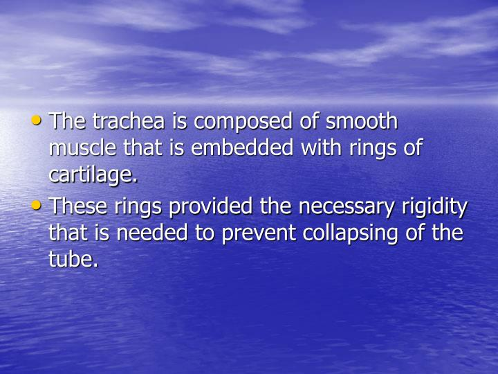 The trachea is composed of smooth muscle that is embedded with rings of cartilage.