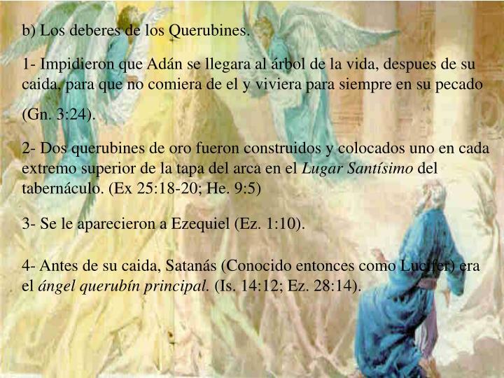 b) Los deberes de los Querubines.