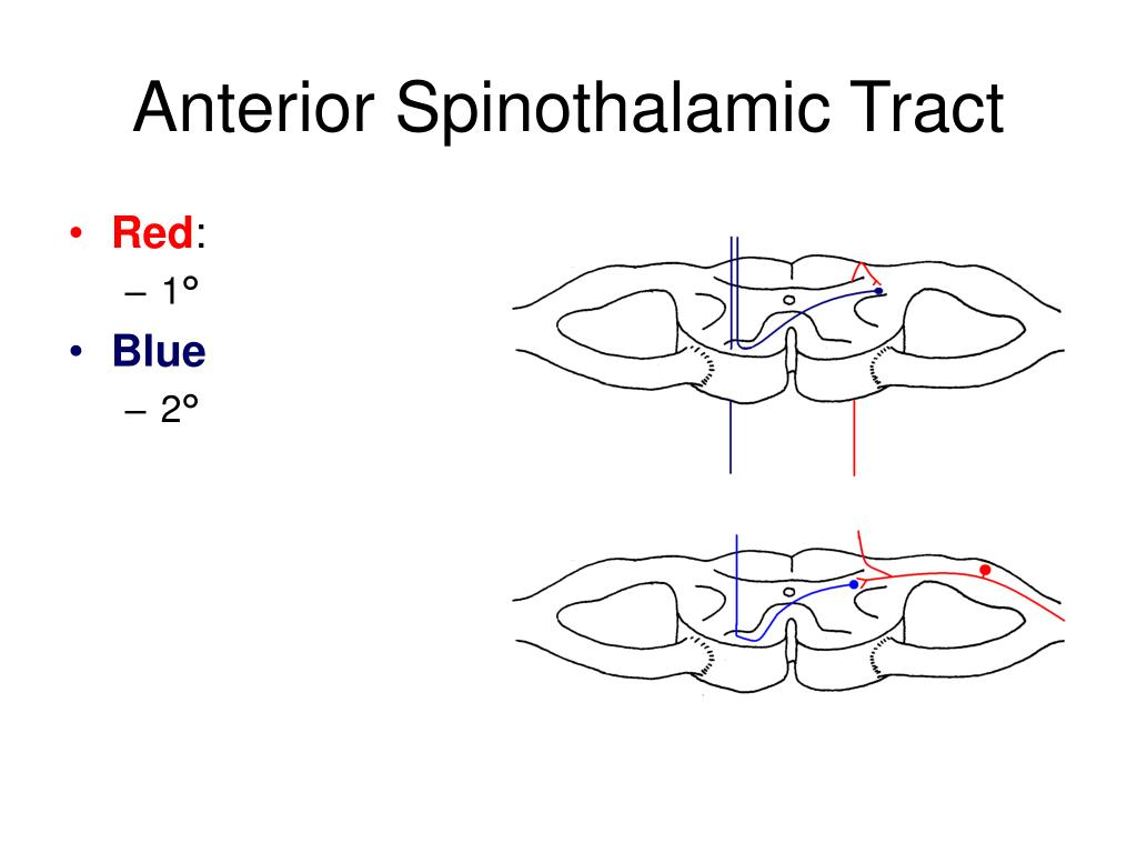 Anterior Spinothalamic Tract