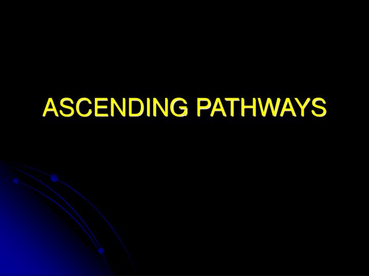 Ascending pathways l.jpg