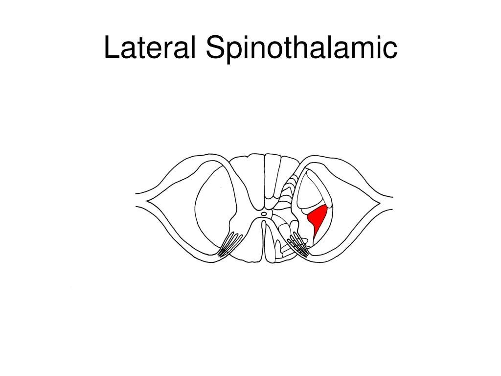 Lateral Spinothalamic