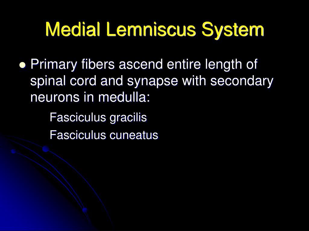 Medial Lemniscus System