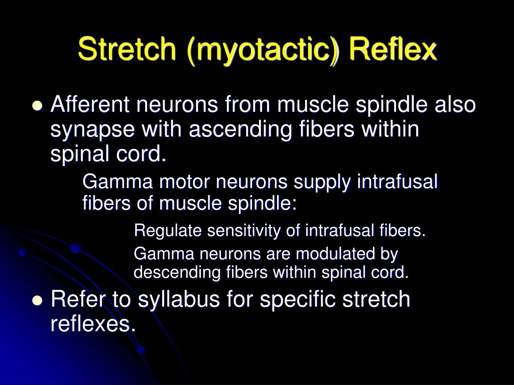 Stretch (myotactic) Reflex