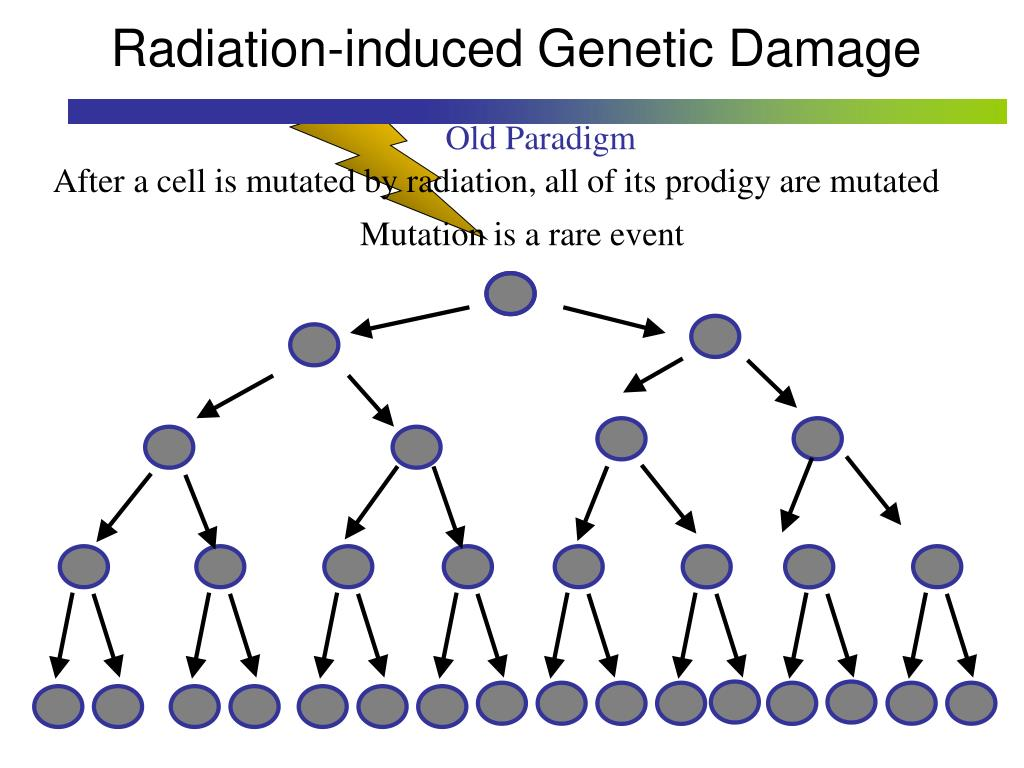 Radiation-induced Genetic Damage