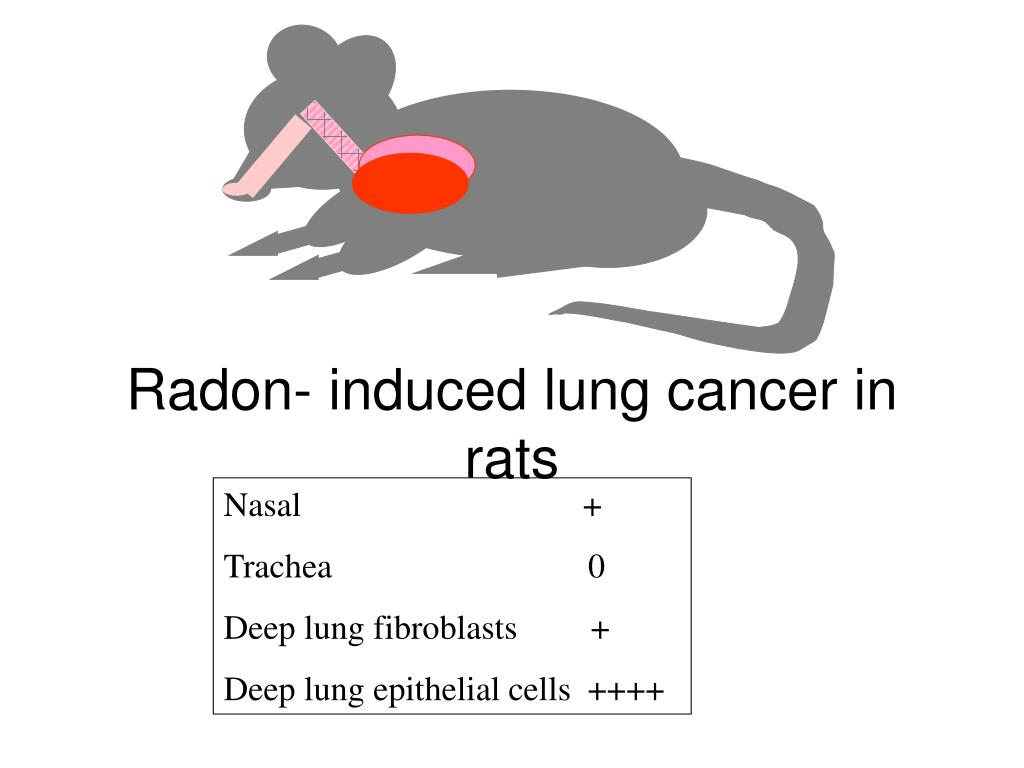 Radon- induced lung cancer in rats