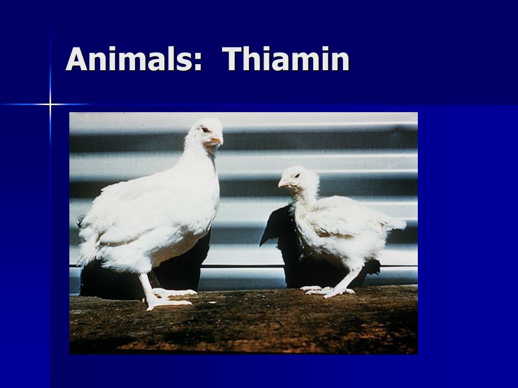 Animals:  Thiamin